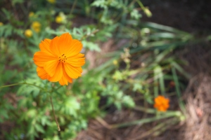 Flower orange